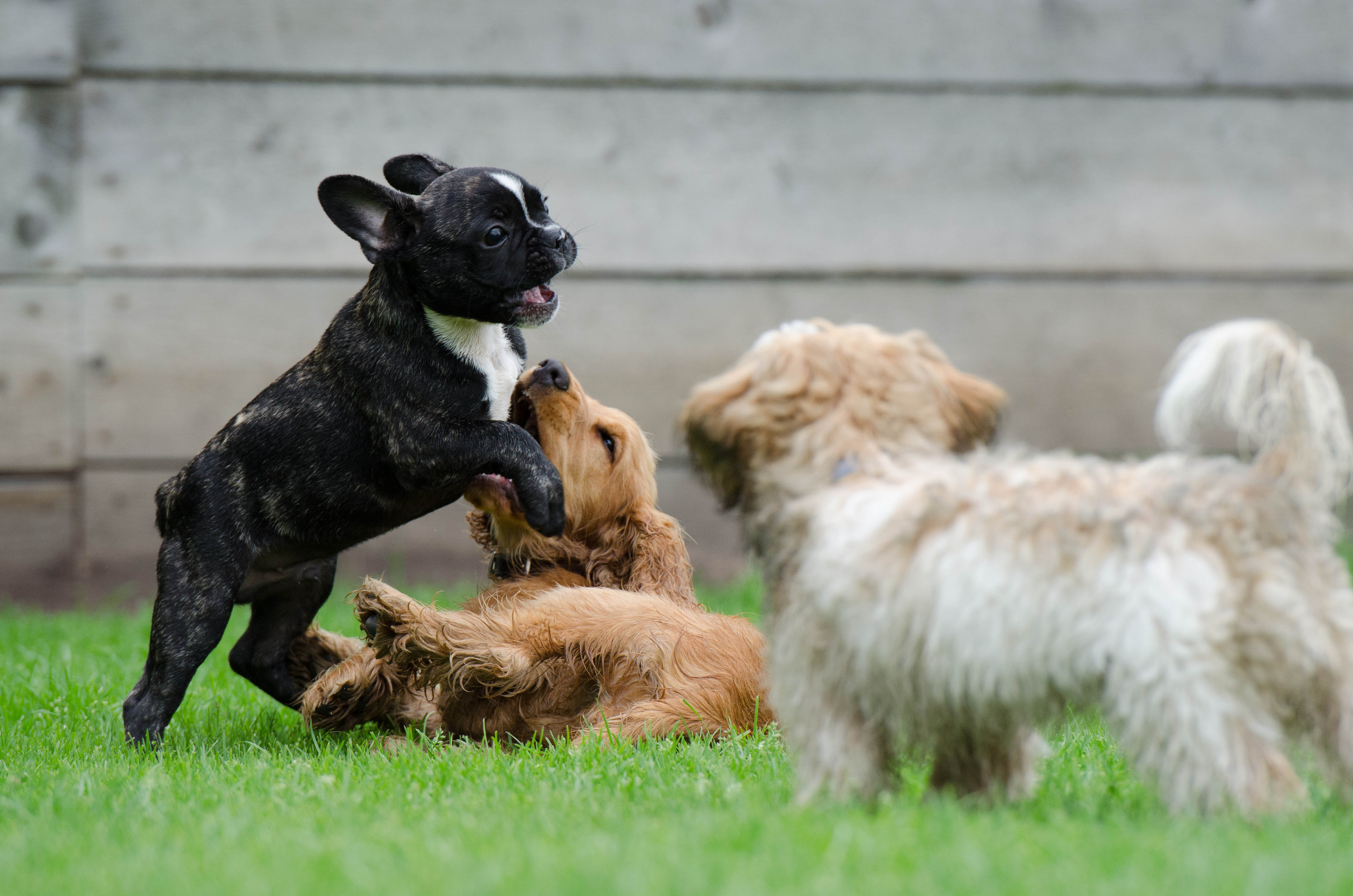 dog-breeds-type-and-kinds-with-info-and-images