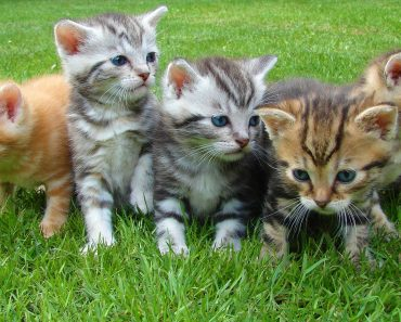 Cat Breeds List Kinds & Types with Info and Images
