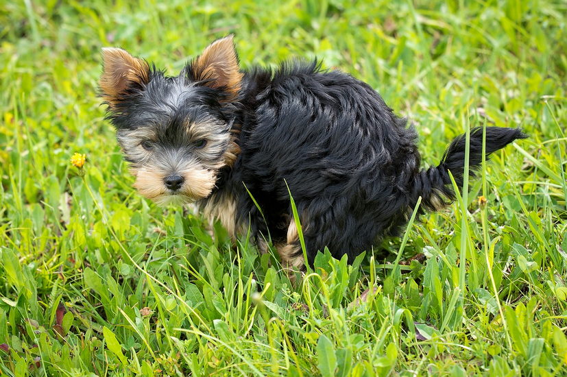 how to potty train a dog fast