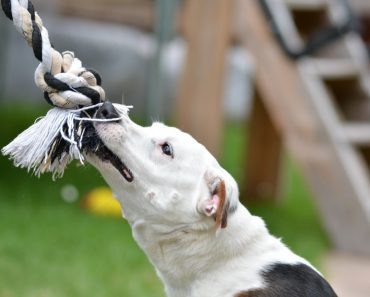 How to train and teach your dog stop biting