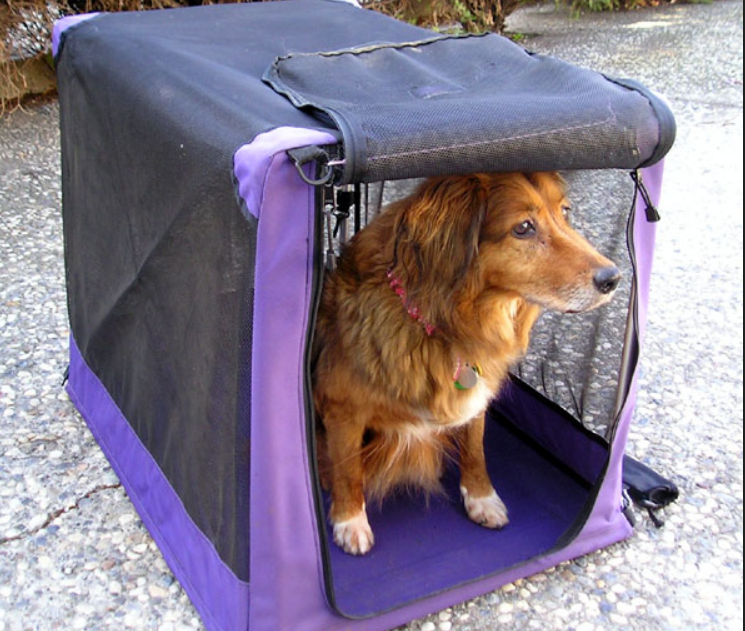 how to crate train a puppy and dog