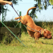 how to train your dogs command and tricks