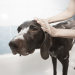 How Often Should You Wash Your Dog or Give Bath