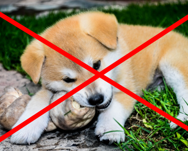 Toxic and Dangerous Foods Your Dog Should Not Eat