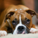 Food Allergies in Dogs - Reasons, Symptoms and Elimination