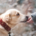 How to Discipline a Dog for Bad Behavior