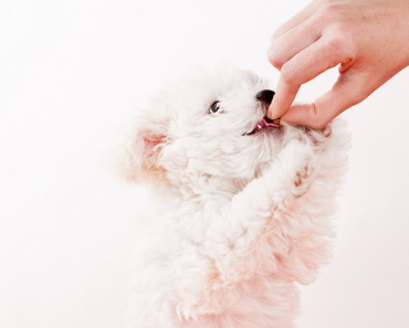 What to Feed a Dog with Diarrhea