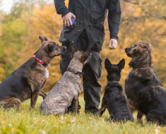 Training Strategies for Dogs