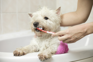 brushing and cleaning dog teeth