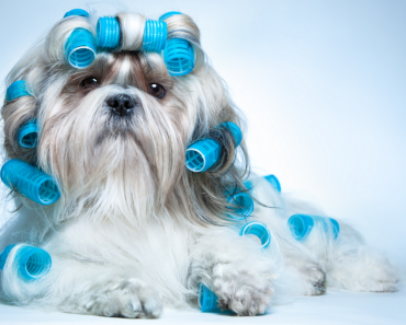 why it is important and necessary to groom a dog