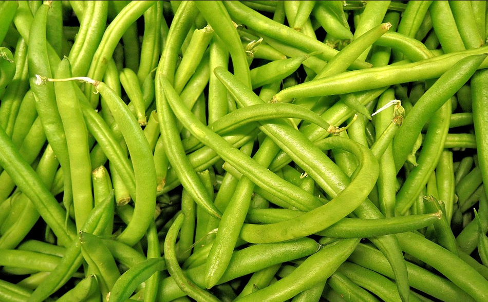 Can Dogs Eat Green Beans Good or Bad