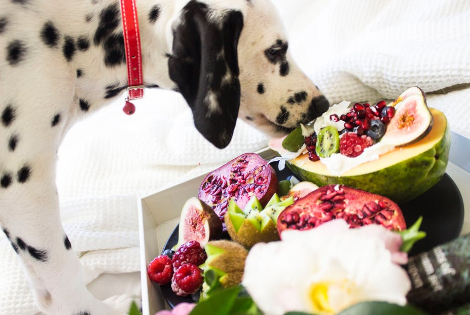 Healthy Best Fruits That Dogs Can Have Eat