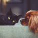 Reasons Explaining Why Dogs Are Better Than Cats