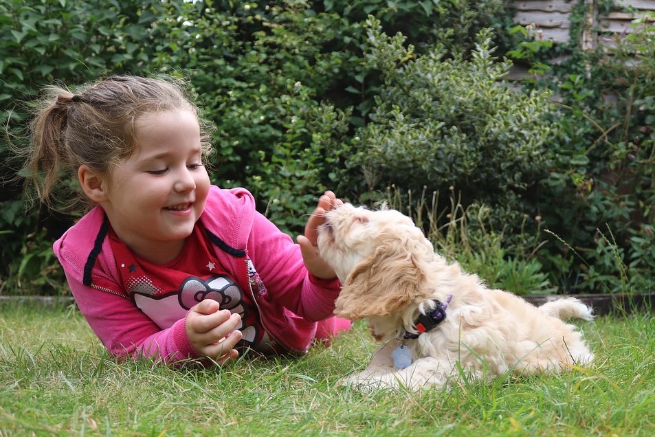 Best Dogs Breeds for Kids
