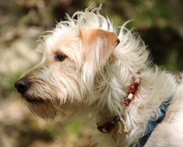 Best Flea & Tick Prevention for Dogs