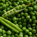 Can Dogs Eat Peas Good or Bad for Dogs