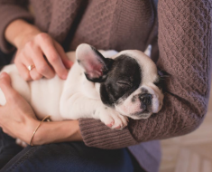 Homemade Remedies for Fleas on Dogs