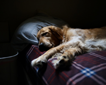 How to Putting Down a Dog to Sleep